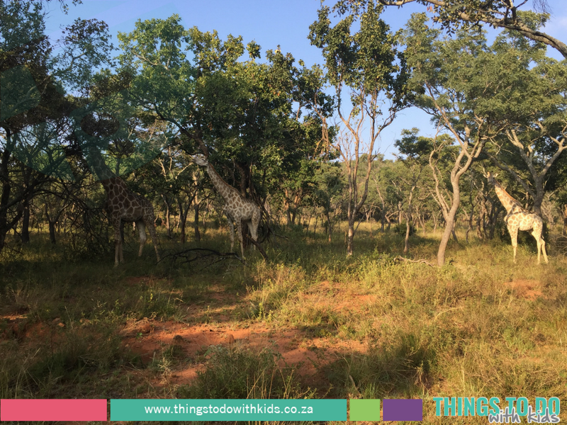 Kololo Game Reserve|Getaway|Things to do with Kids