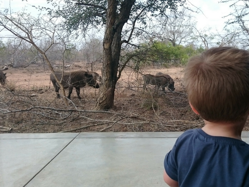 Our Bushveld Safari Adventure WithKids