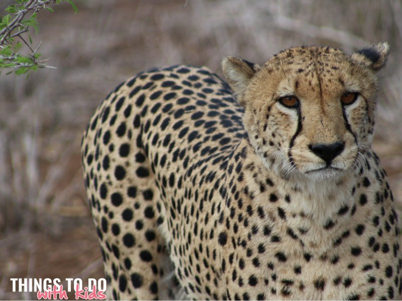 Kids African Safari Adventure| Family Getaways| Things to do with kids