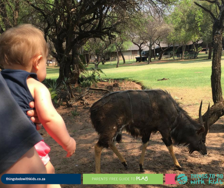 Dinokeng | Family Getaway | Things to do with Kids