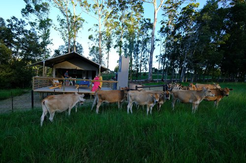 Farms, Fireplaces and Family-the rise of agritourism | Africamps | Things to do with Kids | accommodation