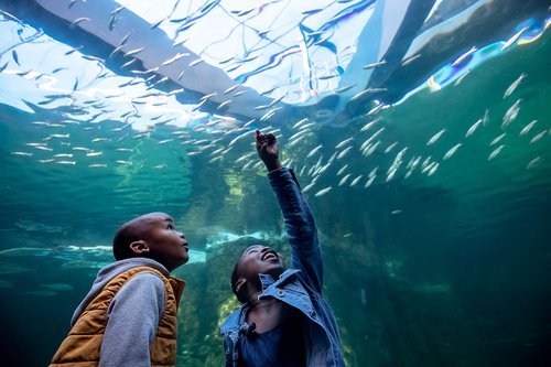 Free Activities & Excursions | Cape Town | Things to do with Kids