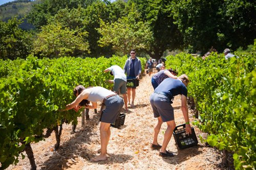 Delheim Harvest Festival | Cape Town | Thinga to do With Kids