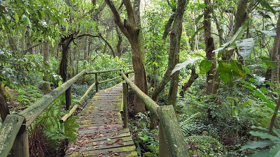 Glenholme nature reserve | Durban | Kids Activities and excursions
