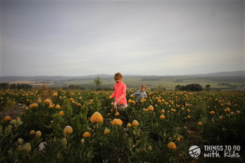 Things to do in Stanford| AfriCamps Camping Outdoors | With Kids