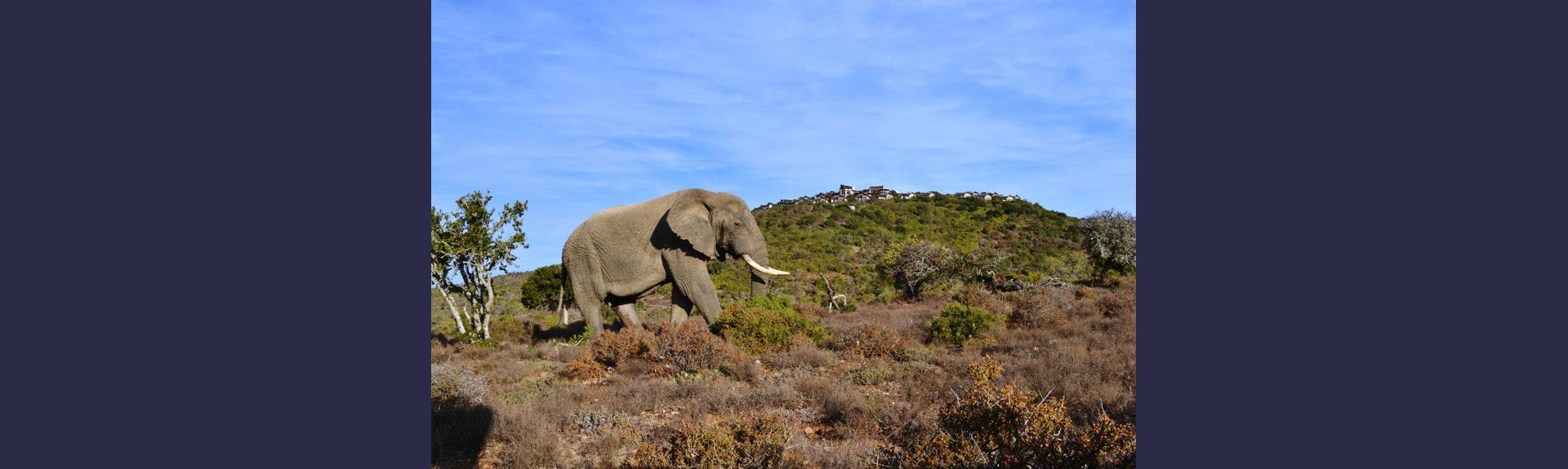 Kuzuko Safari Holiday Accommodation South Africa | Things to do With kids