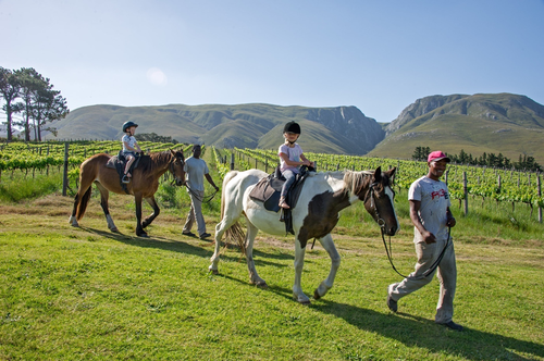 A group of children riding a horse on the Stanford Hills Estate. A family friendly venue for children to partake in exciting activities