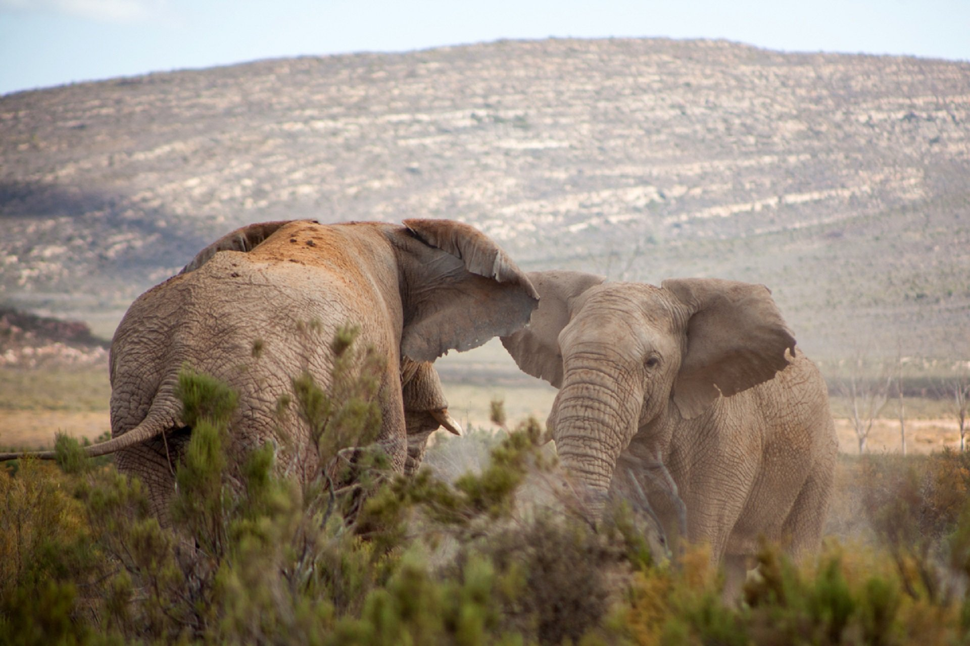 Beyond the classroom: Learn about Elephants