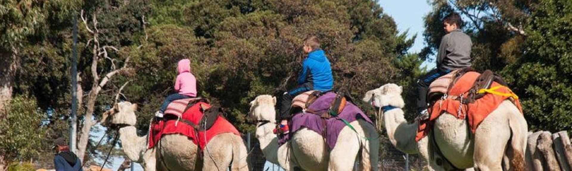 Imhoff Farm | Cape Town | Things to do With Kids