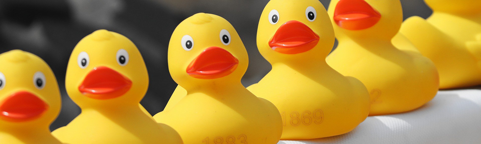 Day at the Duck Race | Western Cape | Things to do With Kids