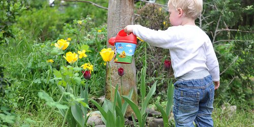 How to grow a water-wise kid-friendly garden