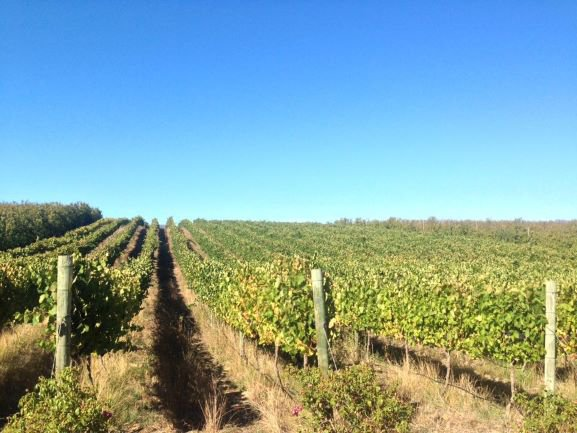 Highlands Road Wine Estate | Elgin Valley | Child-friendly Wine Farms