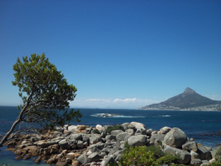 A gorgeous picture of the view from oudekraal braai areas. the view is of lions head.