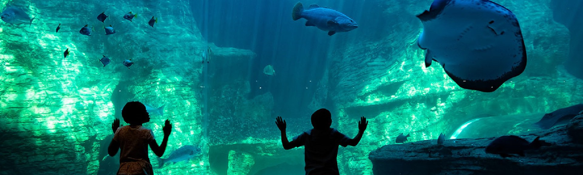 Two Oceans Aquarium | Cape Town | Kids Activities